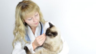 Veterinarian  with cat — Stock Video
