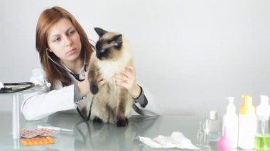 Female vet examining cat — Stock Video