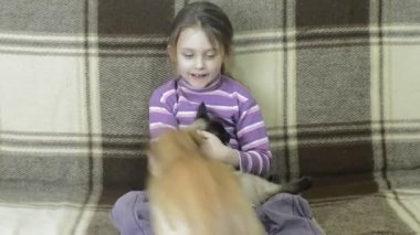 Girl and dog with cat on sofa — Stock Video