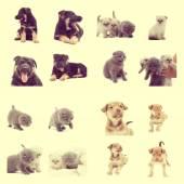 Set of pets — Stock Photo
