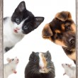 Puppy and kitten and rodent peek — Stock Photo #63909029