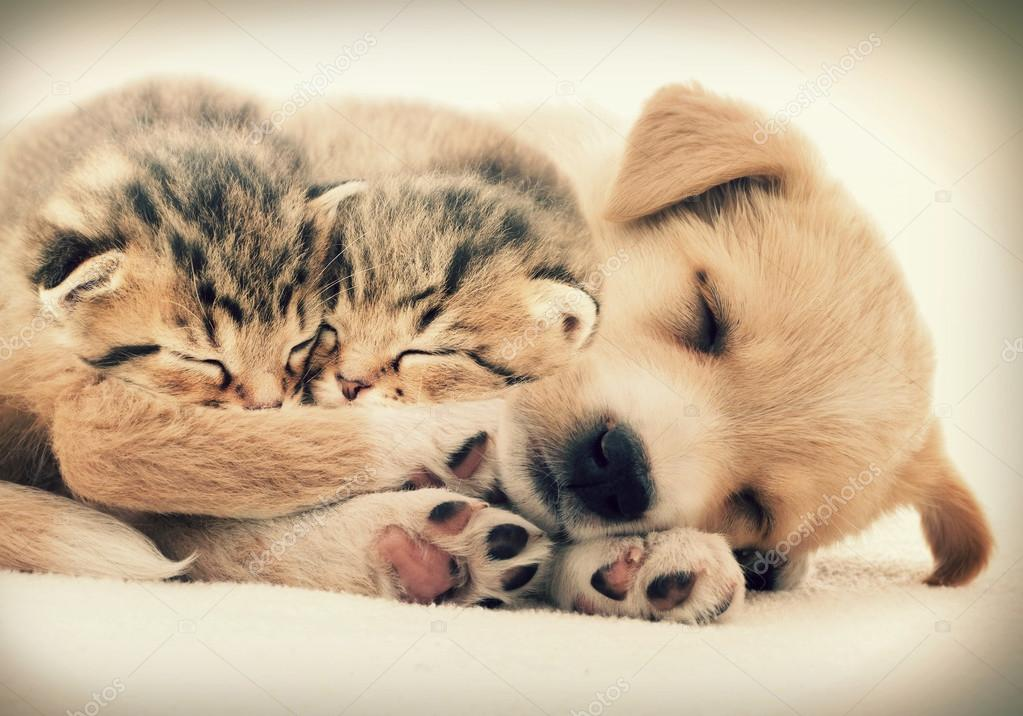 Puppy And Kitten Sleeping Puppy and kittens slee...