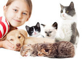 Child and a set of kitten — Stock Photo