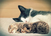 Cat and kittens — Stock Photo