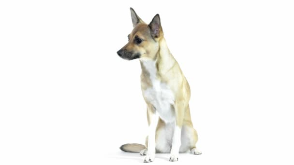 Mirada de perro — Vídeo de stock