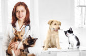 Veterinarian and dog and cat at the clinic — Stock Photo