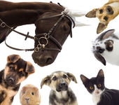 Group of different pets — Stock Photo