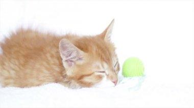 可爱的姜小猫睡 — 图库视频影像