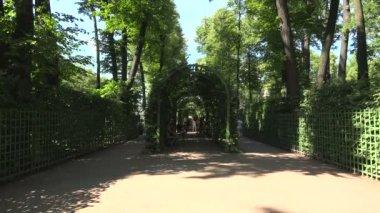 Yaz bahçesinde Pople yürüyüş — Stok video
