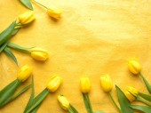 Yellow tulips on yellow background — Стоковое фото