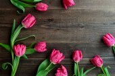 Pink tulips on dark wood background — Photo