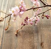 A spray of cherry blossoms on wooden background — Stock Photo