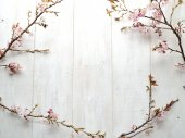 Cherry blossoms on white wooden background — Stock Photo