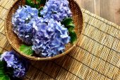 Blue hydrangea in the bamboo basket on bamboo blind background — Stock Photo