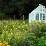 Large greenhouse — Stock Photo #57159111