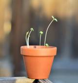 Young potted plant. — Stock Photo