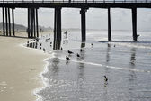 Pismo, Beach, Pier — Stock Photo