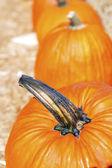 Pumpkin. — Stock Photo