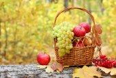 Fresh fruit maple autumn harvest — Fotografia Stock