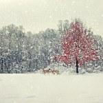Старение Зимние фотографии — Стоковое фото #59746667