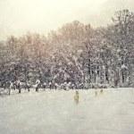 Старение Зимние фотографии — Стоковое фото #59746669