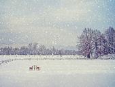 Fotografia de inverno do envelhecimento — Fotografia Stock