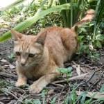 ������, ������: Cat Hunting Snake