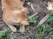 Cat Hunting Snake — Stock Photo