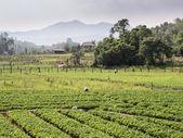 Scenic Landscape in Thailand — Stock Photo