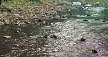 Sakin orman içinden akan nehir — Stok video