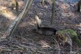 Dear who sleeps on the forest field — Stock Photo
