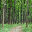 Spring green forest with footpath — Stock Photo #68968449