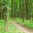 Green spring forest with footpath — Stock Photo #69599453