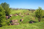 Landscape of a green grassy hills with stones and trees — Stock Photo