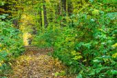 Path through autumn green-yellow forest — Stock Photo