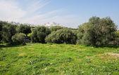 View on the center of Ostuni, Puglia, Italy — Stock Photo