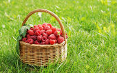 Wicker basket full of ripe red raspberry on the grass — Stock Photo