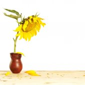 Big sunflower in the pitcher on a wooden table — Stock Photo