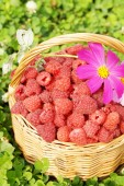 Basket full of ripe raspberry and flowers — Foto Stock