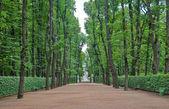 Big alley in the Summer Gardens park in Saint-Petersburg, Russia — Stock Photo