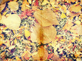 Grunge autumn background with dead leaves, vintage paper texture — Stock Photo