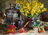 Rural still life with yellow flowers and red currant — Stock Photo
