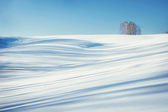 Snowy hill slope with bright shadows and remote tree over it — Stock Photo