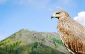 Eagle against the background of a high mountain looking in a distance — Stock Photo