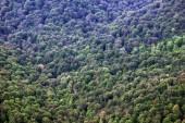 Tlusté zalesněný svah hory — Stock fotografie