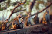 Monkey horde — Stock Photo