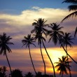 Silhouettes of palm trees at sunset — Stock Photo #65002193