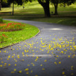 Постер, плакат: Yellow petals on the road