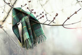 Scarf left on tree branch as a sign that spring has come — Stock Photo