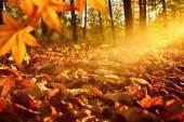 Sunlit forest ground in autumn — Stock Photo